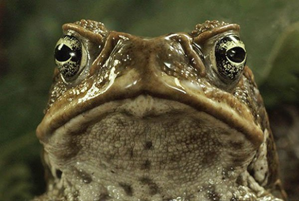 Agency promoting frog toad farming in mexico for Frog agency