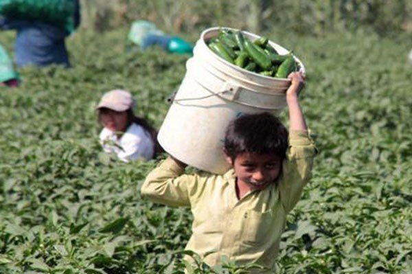 mexico manufacturing and child labor Internal audit reveals 106 children employed at 11 factories making apple products in past year  apple has discovered multiple cases of child labour in its supply  whose manufacturing.