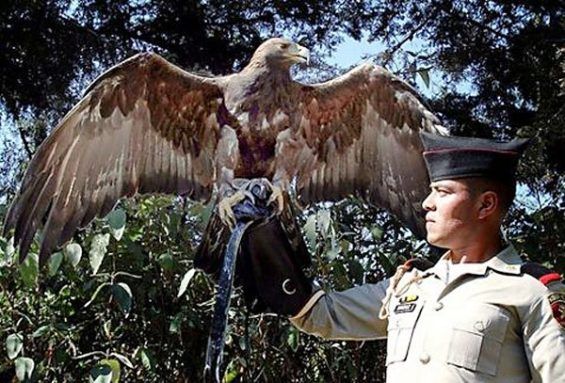 Army cadet with golden eagle.