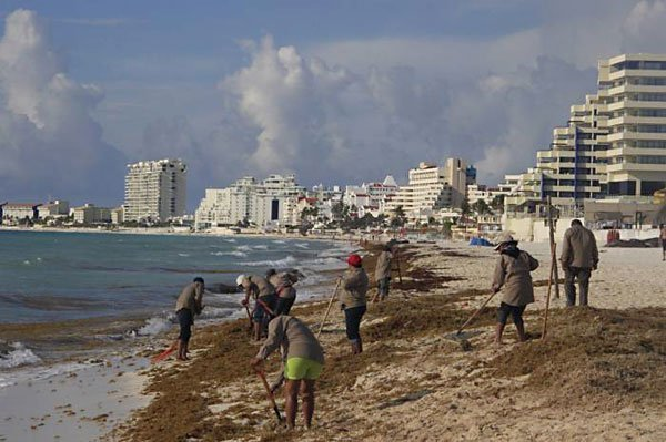 Workers remove sargassum in Quintana Roo.