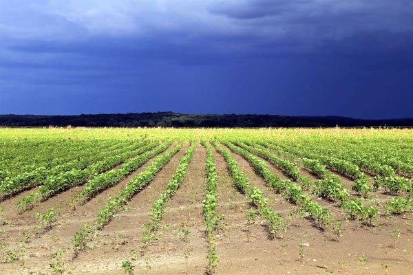 Yucatán wants to prohibit GM crops such as soybeans.