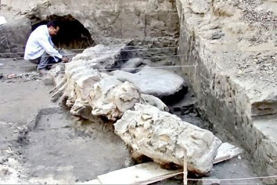 Fossilized remains found in Guerrero.