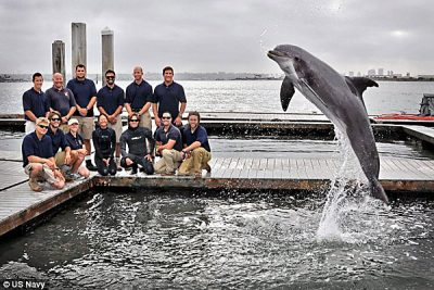 U.S. Navy personnel with a dolphin trained for locating objects such as mines.