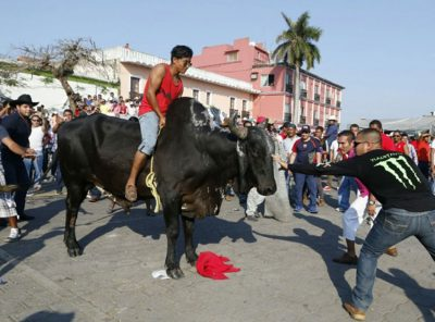 One man mounts a bull while another taunts it at bull-running event.