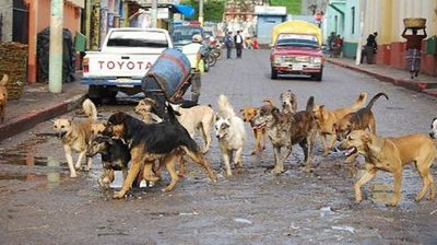 The ubiquitous street dogs.