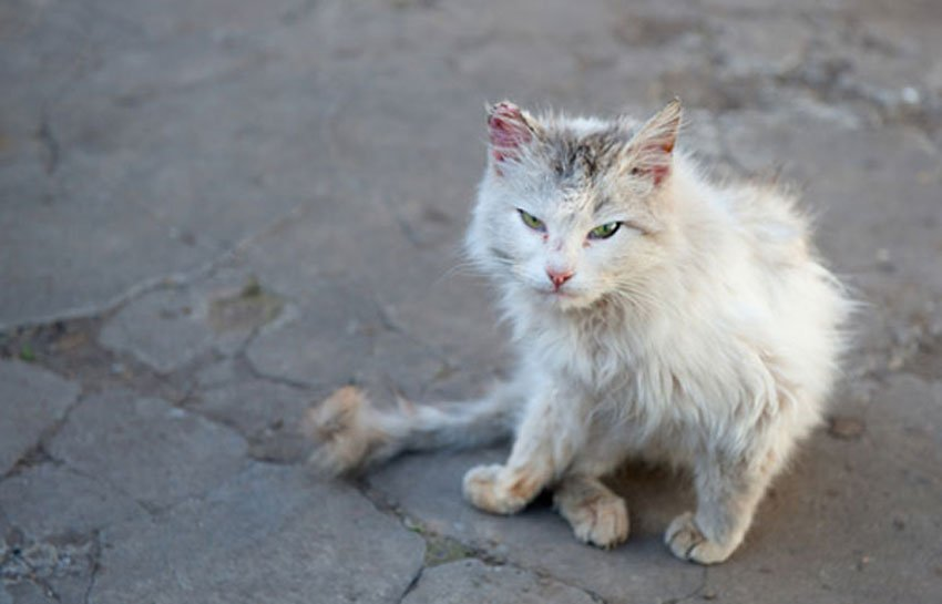 A Mexican street cat.