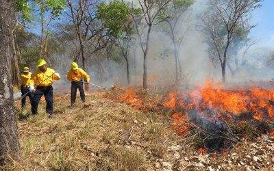Fighting a brush fire in Guerrero.
