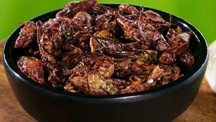 A bowl of grasshoppers at Seattle's Safeco Field.