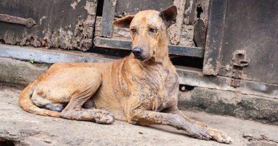A street dog: there are five million in the State of México.
