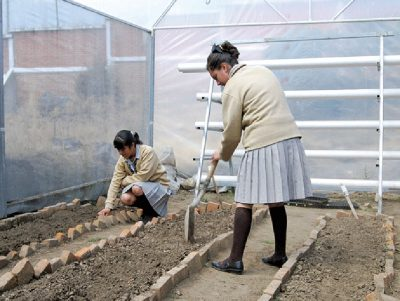 Students at work in a greenhouse at Tlalpan's sustainable school.