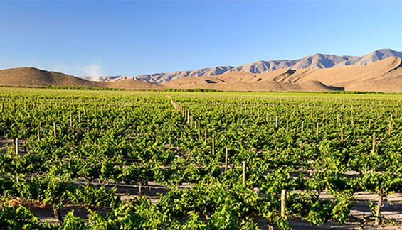 A vineyard in the Parras Valley in Coahuila, where some of Mexico's winning wines came from.