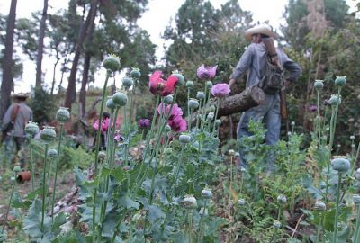 Poppy farmers in Guerrero.
