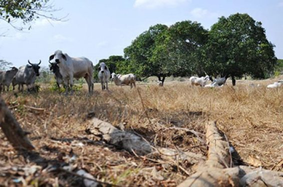 Drought conditions in Quintana Roo.
