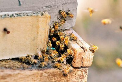 Bee mortality blamed on insecticide.