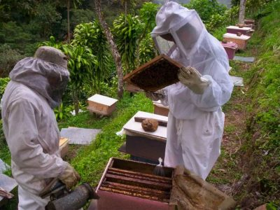Beekeepers and hives in Campeche