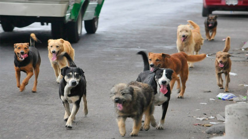 Street dogs: just how many are there?