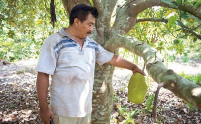 A jackfruit producer with an example of the fruit.