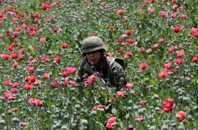 A soldier is surrounded by opium poppies in Guerrero.
