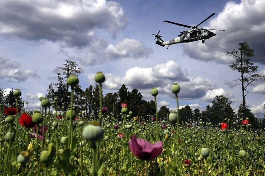 A military helicopter flies over opium poppies in Chihuahua