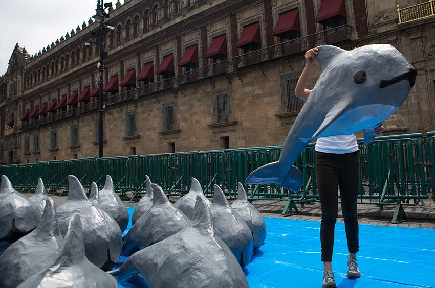 A World Wildlife Fund member carries a papier mache vaquita at a demonstration in Mexico City in July