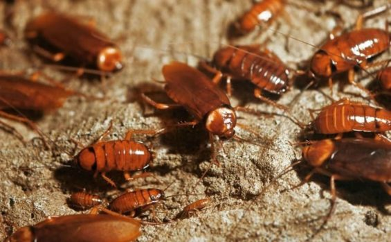 Cockroaches have infested a seniors' home in Zacatecas.