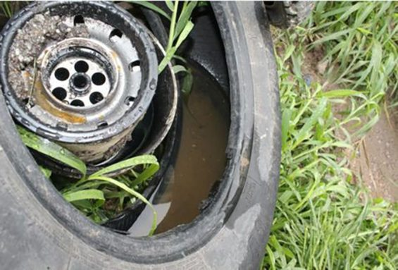 Getting rid of old tires, in which water collects, is one measure to combat dengue.