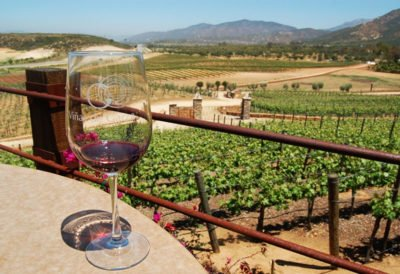 A vineyard in the Valle de Guadalupe.