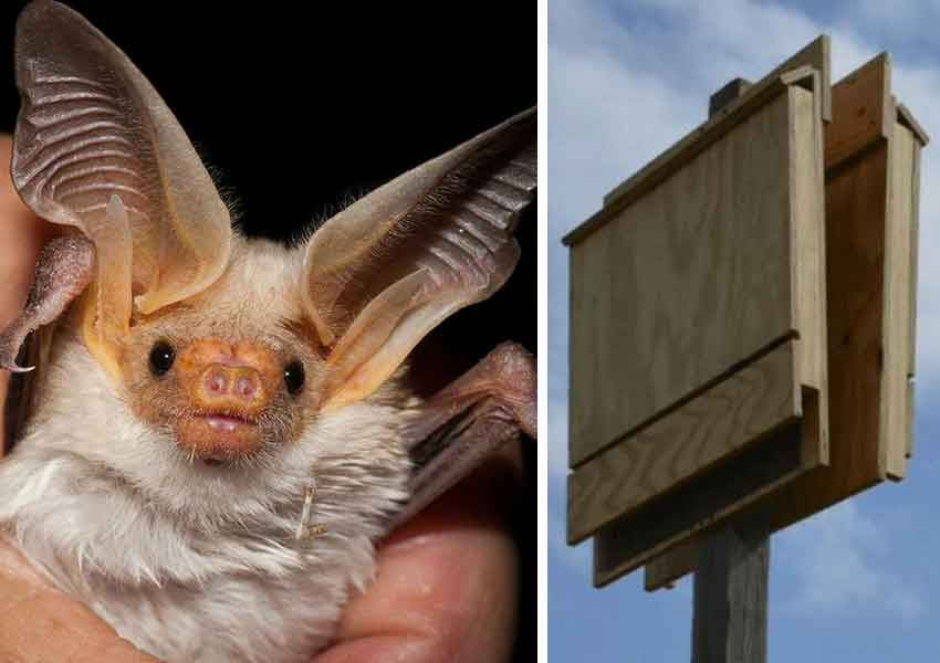 A bat and one of Monterrey's new bat houses.