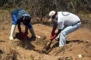 Forensic officials dig up a body in Morelos.