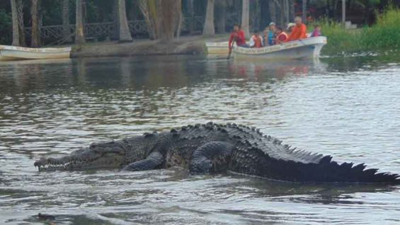 A spike in crocodile numbers was seen last spring in Chacahua.