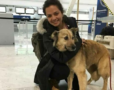 A 'flight parent' and one of the Backstreet dogs arrive in Canada.