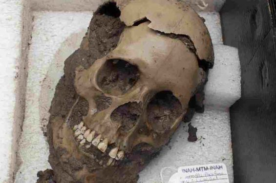A skull discovered at a Mexica temple.