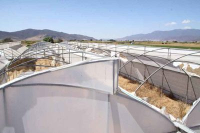 Researchers have come up with a use for abandoned greenhouses.