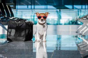 Pet travel made easier in Mexico.