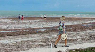Seaweed on a beach on Isla Holbox.