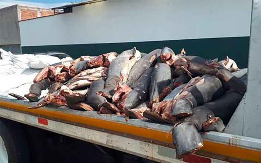 Shark carcasses found on the roadside in Michoacán.