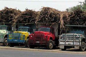 Sugar cane harvest time in Veracruz.