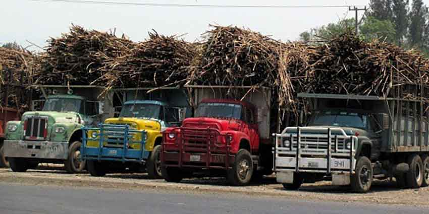 Sugar cane harvest time in Veracruz.