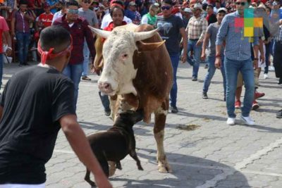 A dog joins the fun during running of the bulls yesterday in Tlacotalpan.