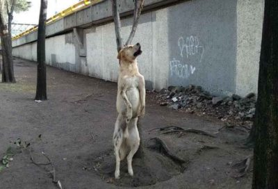 The gruesome sight in Mexico City last week.