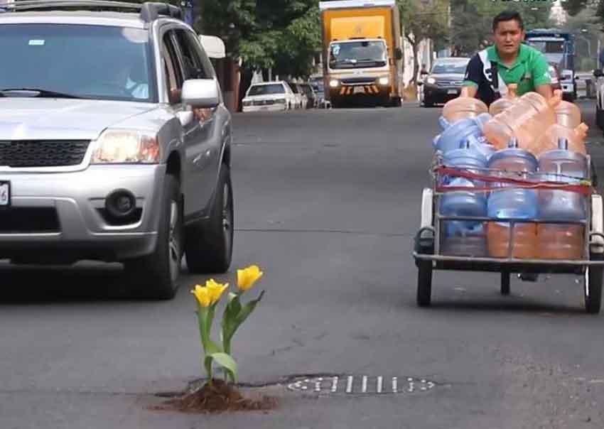 Flowers grace a Mexico City pothole.