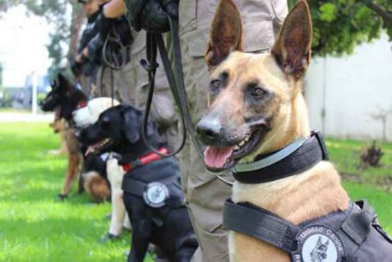 New recruits at the Criminal Investigation Agency.