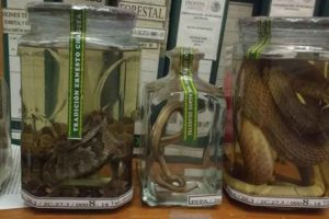 Confiscated mezcal: as if a worm's not enough.