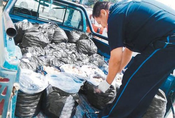Police find a big haul of turtle eggs.