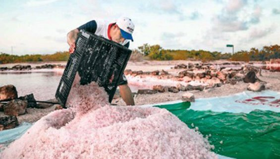 Harvesting pink salt in Yucatán.