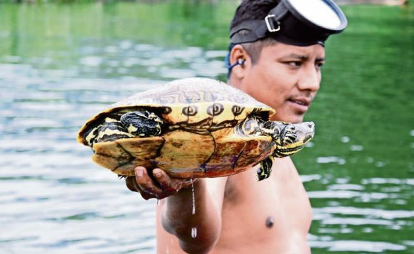 A resident with one of the turtles found in Sal creek.