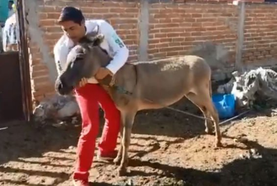 Romero and his donkey.