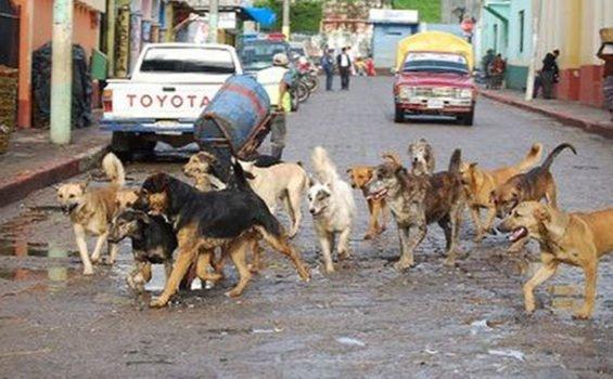 Nice doggies? Not necessarily.