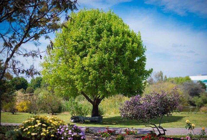 Puebla's accredited botanical garden.