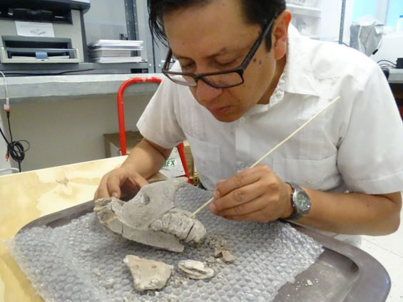 Archaeologist Pérez examines mammoth bones.